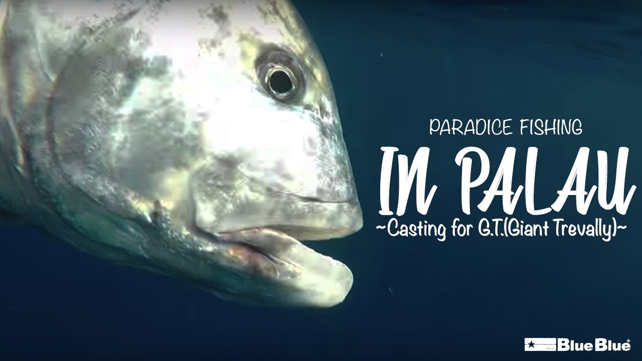 Paradice fishing in PALAU ~Casting for G.T.(Giant Trevally)~